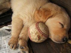 Dogs and baseball ♥