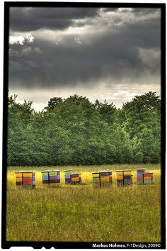 If I could lead any type of life it would be on a honey bee farm with a few chickens for fresh eggs and a few sheep for warm clothes, and a few honey bees to make it one sweet life. Colorful Québec honeybee farm
