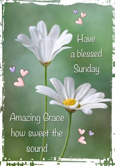 Have a blessed Sunday from dear Joanne