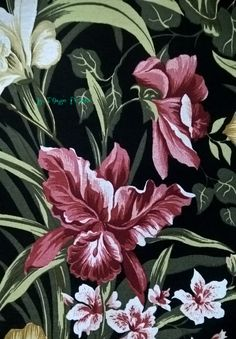 Orquídeas rose