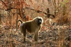 Kamerun Labrador Retriever, Dogs, Animals, Labrador Retrievers, Animales, Animaux, Doggies, Animal, Labrador Retriever Dog