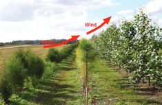 Most farmers planted some sort of wind break around their property. Wind breaks offer protection from the wind and blowing snow. Houses stay warmer in the winter and cooler in the summer, cutting energy costs. Wind Break Garden, Forest Garden, Garden Farm, Farm Yard, Landscape Design, Garden Design, Off Grid, Hobby Farms, Garden Landscaping