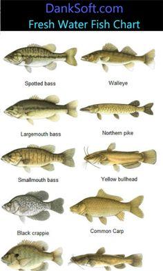 freshwater fish - Google Search