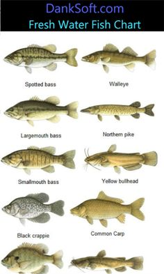 How to tell the difference in blue channel and flahead for Freshwater fishing tips