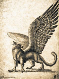 Griffin by axe-ql on deviantART Magical Creatures, Fantasy Creatures, Griffin Tattoo, Legends And Myths, Mythological Creatures, Creature Design, Animal Drawings, Wolf Drawings, Fantastic Beasts