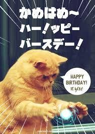 関連画像 Message Card, Birthday Messages, Birthday Photos, I Love Cats, Funny Animals, Quotations, Happy Birthday, Kawaii, Seasons