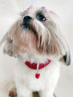 Olha como ficou chique...com este colar feito pela Estilo Pets
