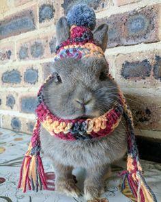 Bun bun all wrapped up