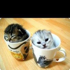 Kitttens!