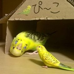 Shakespeare play as done by parakeets