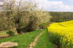 Le parc naturel régional du vexin français near La Roche Guyon, France France, Vernon, Country Roads, Tours, Normandie