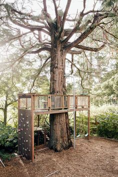 A climbing wall and tree house in the back yard.