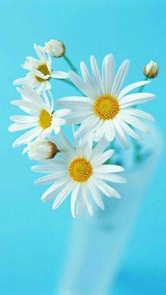 39 trendy Ideas for flowers arrangements wild daisies Daisy Wallpaper, Flower Phone Wallpaper, Sunflower Wallpaper, Cute Wallpaper Backgrounds, Flower Backgrounds, Happy Flowers, Flowers Nature, Pretty Flowers, White Flowers