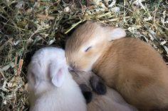 Baby bunny snorgle!