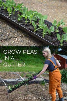 May Gardening: Water