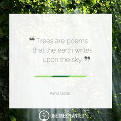 Inspirational Quotes About Trees - OneTreePlanted
