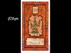 Shaman Wisdom Card