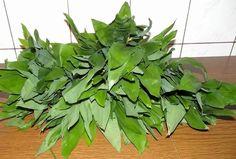 Herbs, Cooking, Health, Plants, Tortillas, Recipes, Magick, Kitchen, Mince Pies