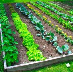 17 Clever Hacks For Your Vegetable Garden   Use Certain Flowers To Deter  Pests