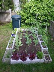 Great post (the bottom of the page) about cinderblock gardening as well as veggies in pots.