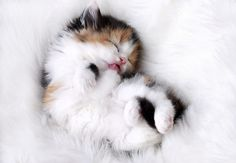 So, I'm highly allergic to cats and generally don't like them at all; but even I think this is cute!