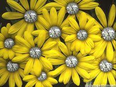 Garden-Swap-daisies