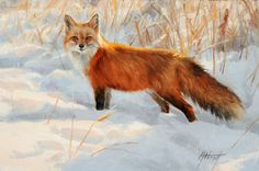 Edward Aldrich, Sun on Snow, oil, 8 x - Southwest Art Magazine Wildlife Paintings, Animal Paintings, Art Fox, Predator Hunting, Fox Collection, Art Pictures, Art Pics, Photos, Southwest Art