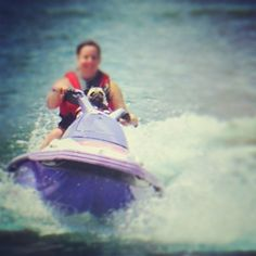 They all own jet skis. | 16 Reasons Why Pugs Are The MF Thugs
