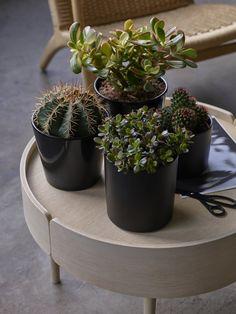 Kaktuser og sukkulenter finnes i mange spennende former og fasonger.