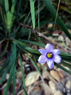 """What's in Bloom At The Santa Barbara Botanic Garden""  http://joy-us.com/blog/?p=3499"