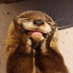 When someone compliments me 😍😍😍 Cute Little Animals, Cute Funny Animals, Baby Animals, Fluffy Animals, Axolotl, Funny Babies, Cute Babies, Otters Cute, Kawaii Plush