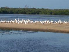 Ding Darling Preserve Sanibel Florida 2006