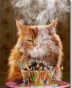 Birthday Cupcake Funny Card