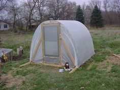 Greenhouse made with cattle panel and 2x4s.