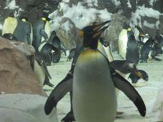 Penguin at Sea World San Diego