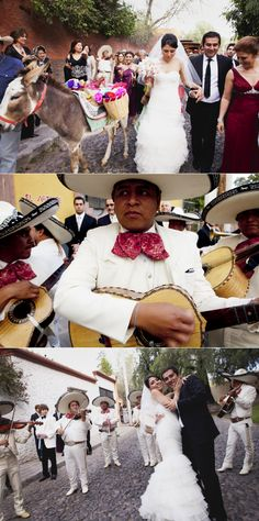 Love the donkey Benito tequila donkey San Miguel Allende wedding Persian wedding Boda Persa Www.smapenzi.com