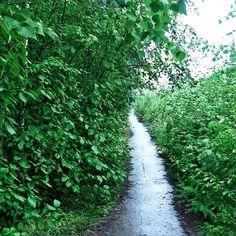 【kita_sh】さんのInstagramをピンしています。 《2016.8.12 #summer #夏 #nature #自然 #sky #そら #Russia #ロシア #forest #森 #trees #木 #green #みどり #way #パス #pathway  #shine #光 #white #白》