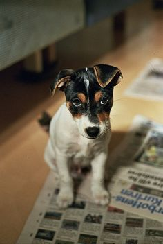 Terrier. Trouble with a capital T. These dogs make you cry or make you laugh. lol.