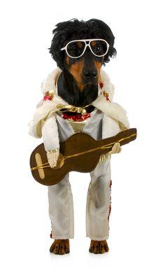 #dog #costume