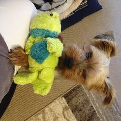 What?  Froggy !?!   I was sure I had destroyed the last one........