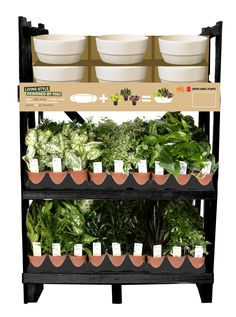 Look for the Novara Mix & Match rack at a Lowe's store near you and see what why Exotic Angel Plants are considered the best houseplants on Earth!