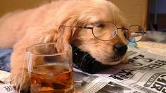 dog with glasses Animal Law, Dogs Playing Poker, Funny Animals, Cute Animals, Animals Dog, Sleepy Animals, Dog With Glasses, Tea Glasses, Sleeping Puppies