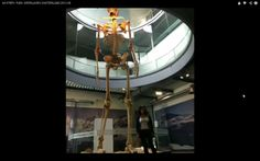 Reconstruction of the Giant Skeleton found in Loja in Ecuador October About tall. Giant Skeletons Found, Ancient Aliens, Ecuador, Fair Grounds, October 19, History, Weird, Knowledge, Historia