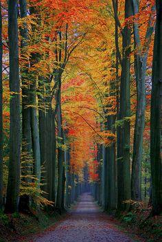By Vincent Brassinne - Kapucijnendreef, forêt de Soignes, close to the Tervuren arboretum.