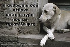 Kindness To Animals, Greek Quotes, Animals And Pets, Dog Lovers, Labrador Retriever, I Am Awesome, Best Friends, Feelings, Cats