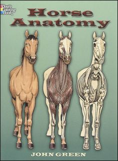 Horse Anatomy Coloring Book   Grade PreK - Adult  $3.50