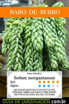 Low Maintenance Plants, Little Plants, Cactus Y Suculentas, Wonderful Things, Planting Succulents, Herbalism, Home And Garden, Vegetables, Green