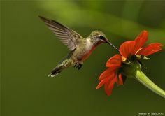 Aves Hermosas - la toma perfecta!