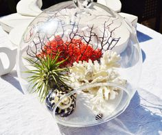 Hey, I found this really awesome Etsy listing at https://www.etsy.com/listing/161180038/black-white-red-terrarium-with-white