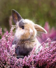 Cute rabbit photography,House Ears Pets White Sketch Cute Funny Cartoon Names Lionhead Run Watercolour Mini Lop Indoor Black Pattern Cute Little Animals, Cute Funny Animals, Cute Dogs, Baby Animals Pictures, Cute Animal Pictures, Cute Baby Bunnies, Cute Babies, Fluffy Animals, Animals And Pets